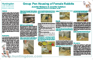 Group Pen Hosing of Female Rabbits